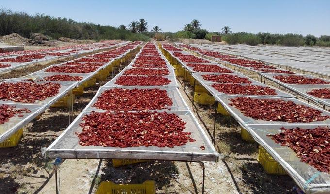 Comment sécher la tomate